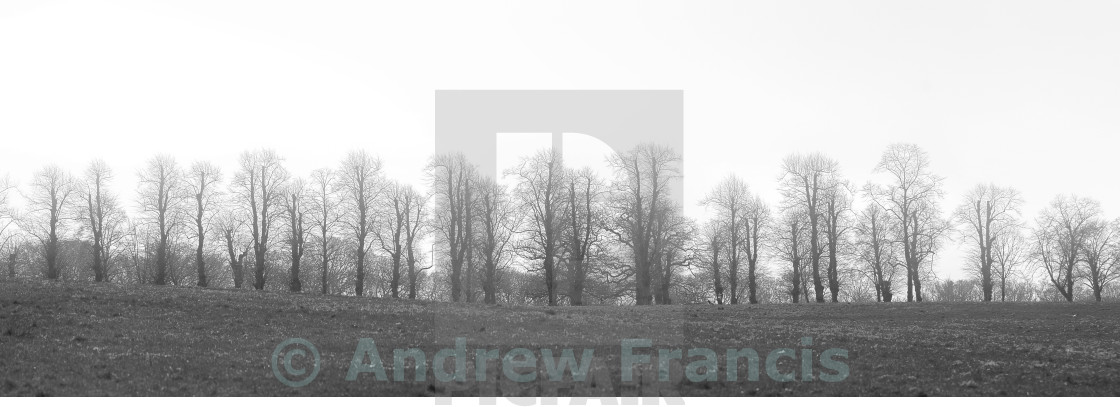 """""""Line of Trees"""" stock image"""