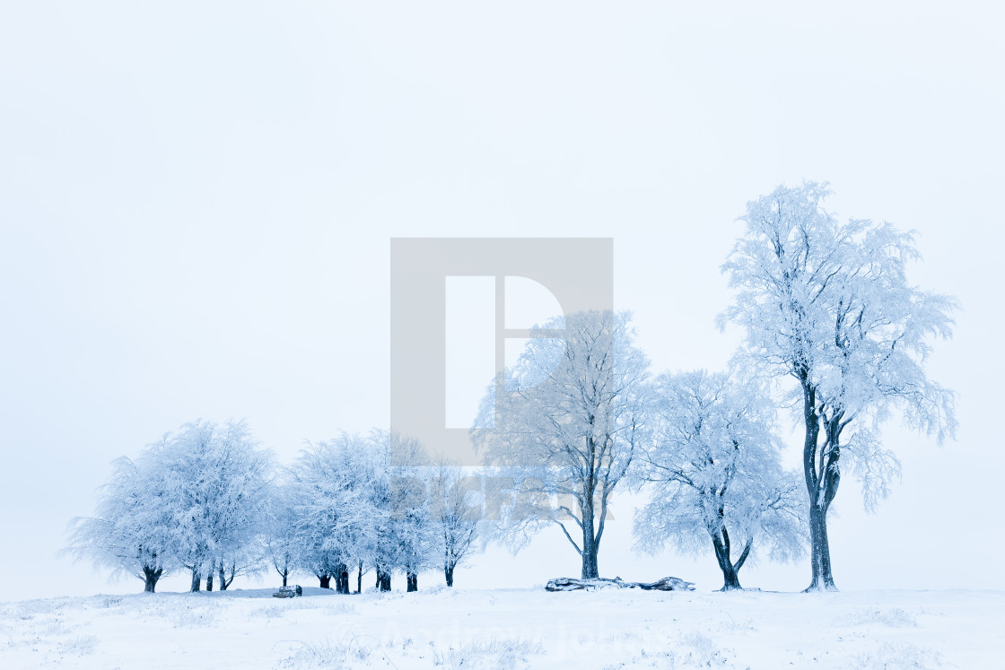 """Ice trees"" stock image"