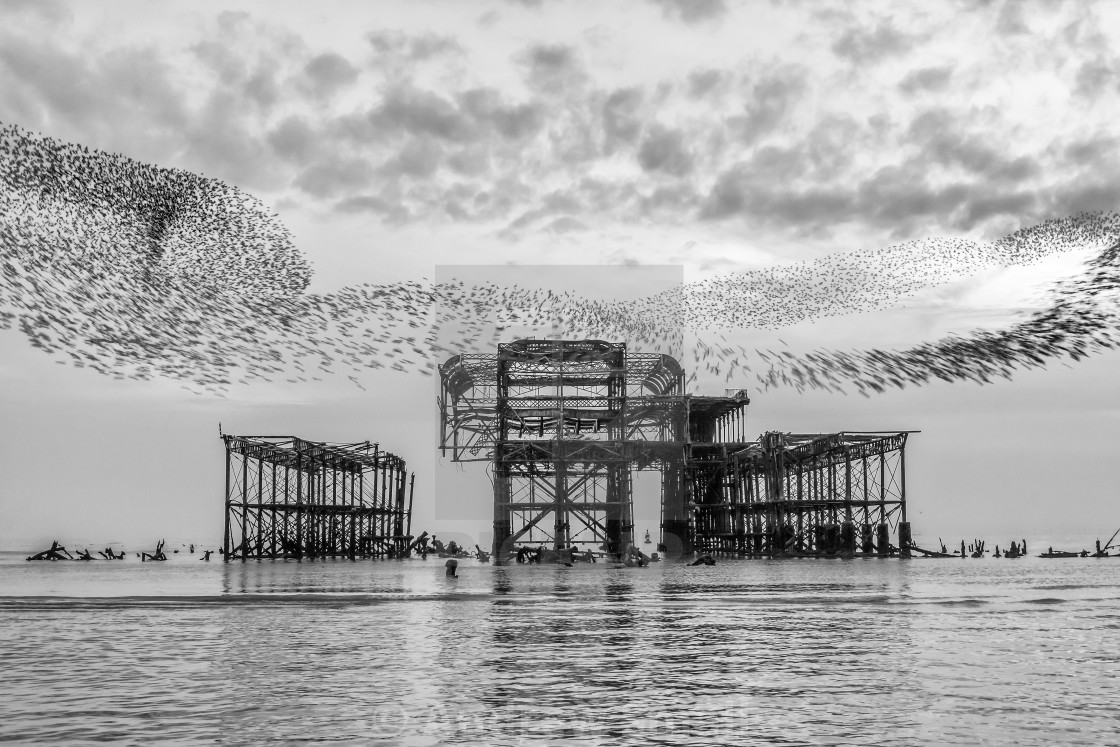 """Starlings Over The West Pier"" stock image"