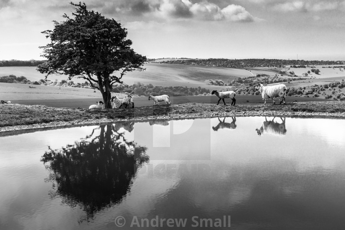 """""""Dew Pond South Downs"""" stock image"""