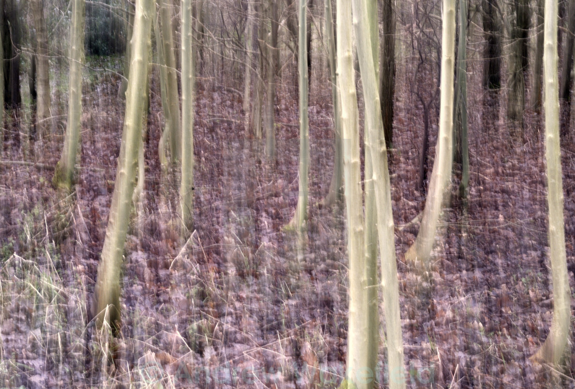 """""""Woodland abstract"""" stock image"""