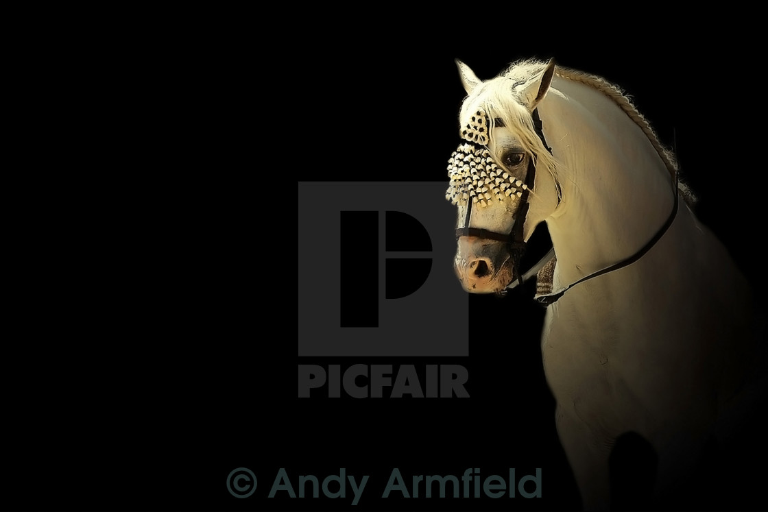 """Feria 4 ~ Under Spotlight"" stock image"