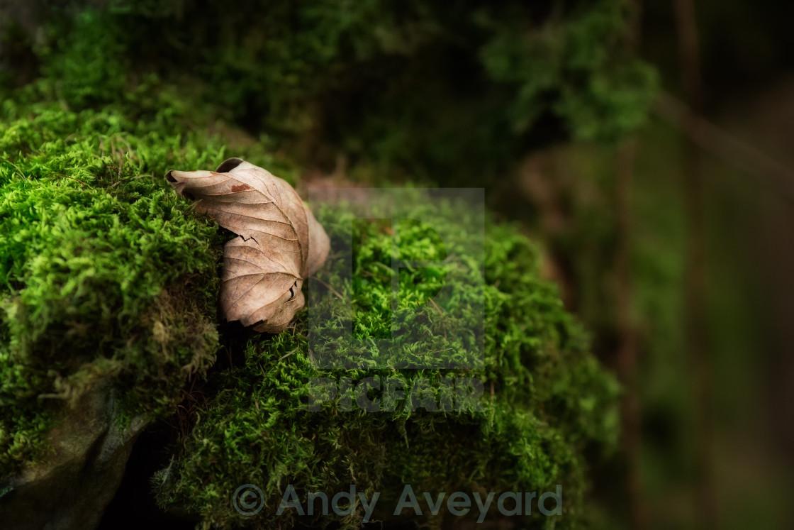 """Leaf on Moss"" stock image"