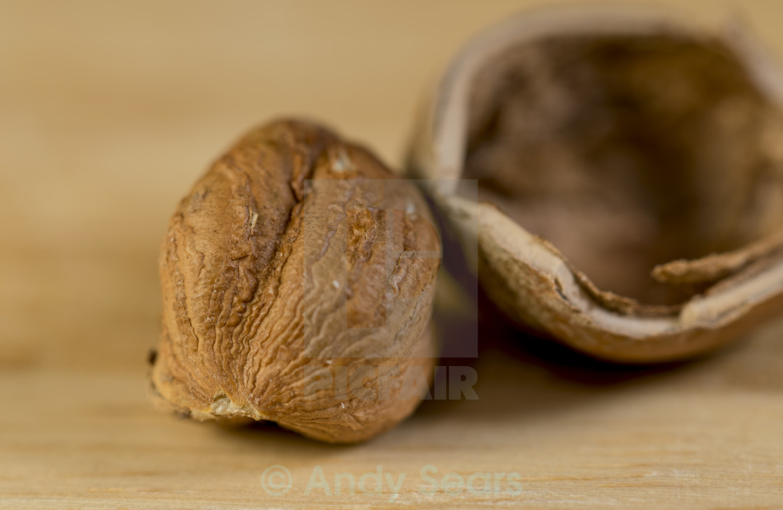"""Nut"" stock image"