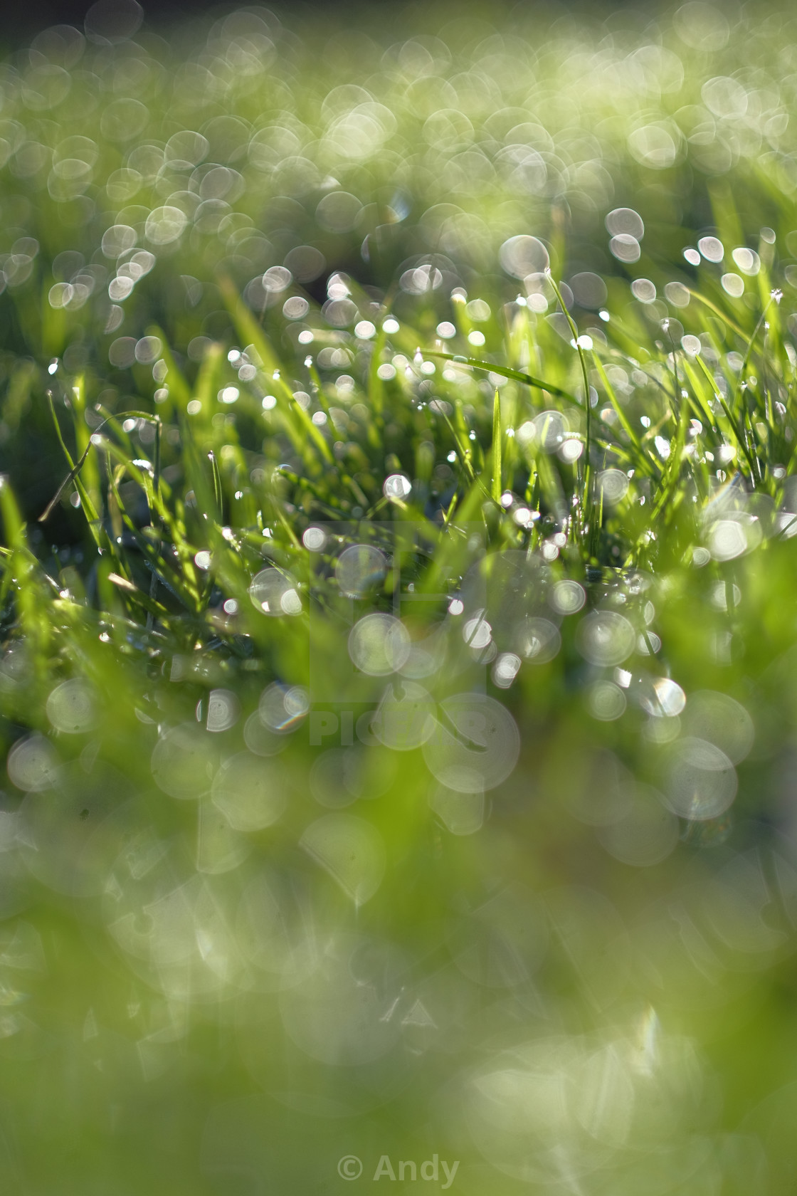 """Grass and dew"" stock image"