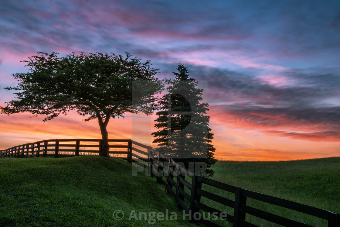 """Sunrise over trees in Caledon"" stock image"