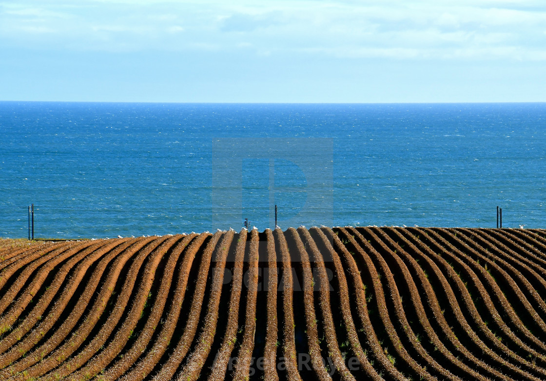 """Furrowed field at the coast"" stock image"