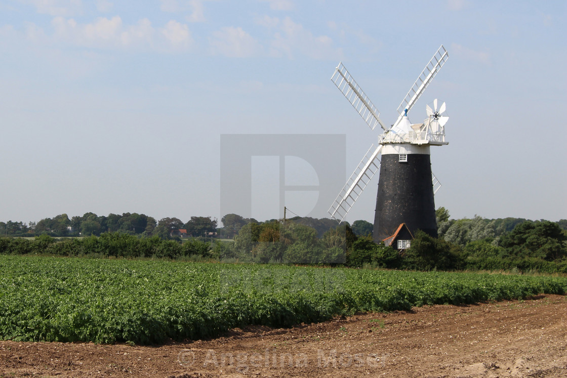"""Burnham Overy Staithe Windmill"" stock image"