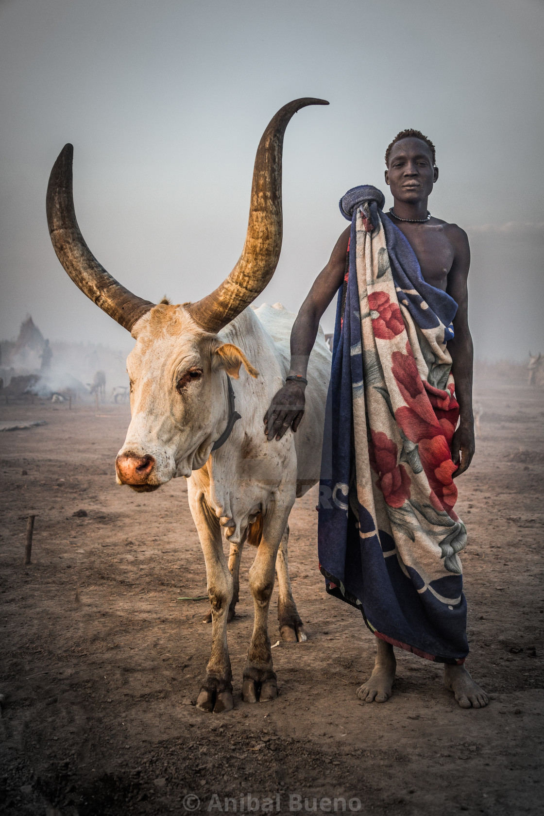"""Mundari man with his watusi"" stock image"