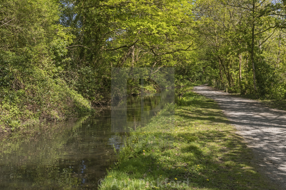 """""""Swansea Canal between Clydach and Pontardawe, South Wales, UK"""" stock image"""