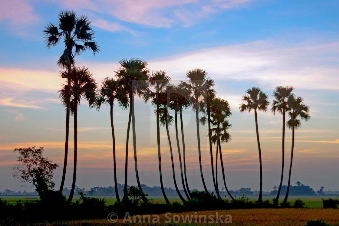 """palms"" stock image"