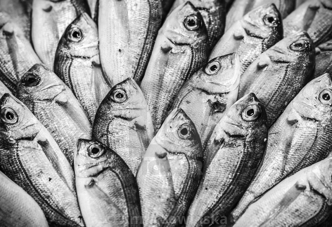 """fresh fish"" stock image"