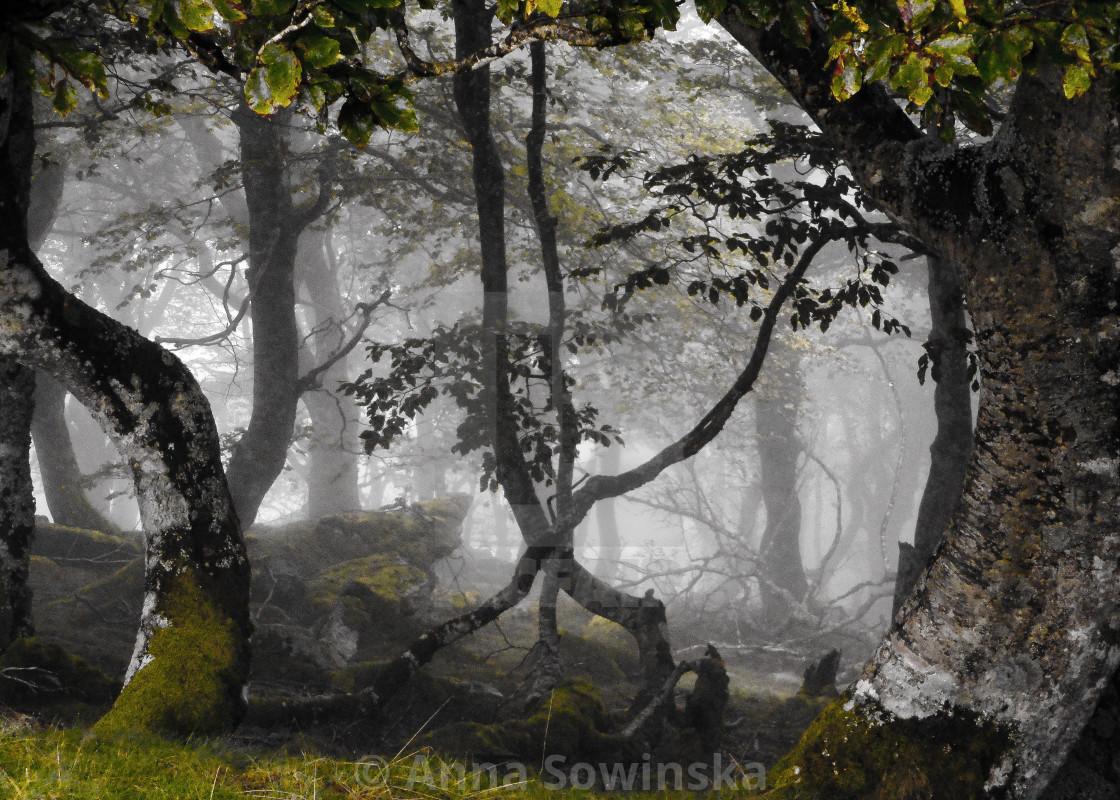 """dark forest"" stock image"