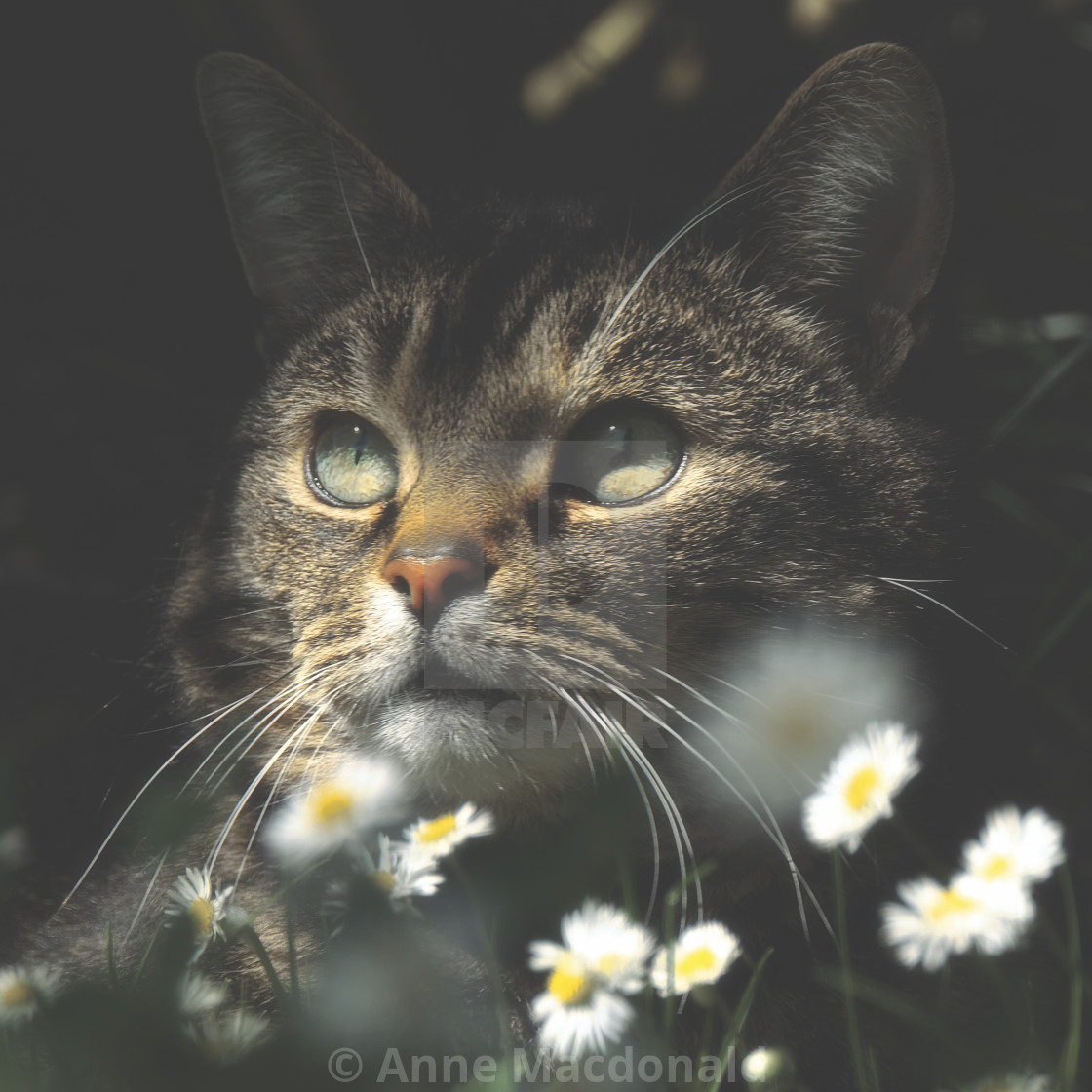 """Mosey Under The Trees With The Daisies"" stock image"