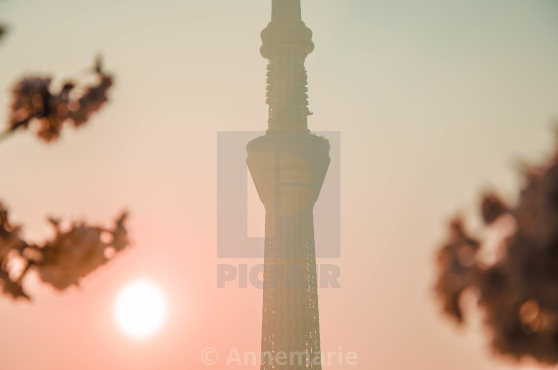 """Skytree with cherry blossoms 2"" stock image"