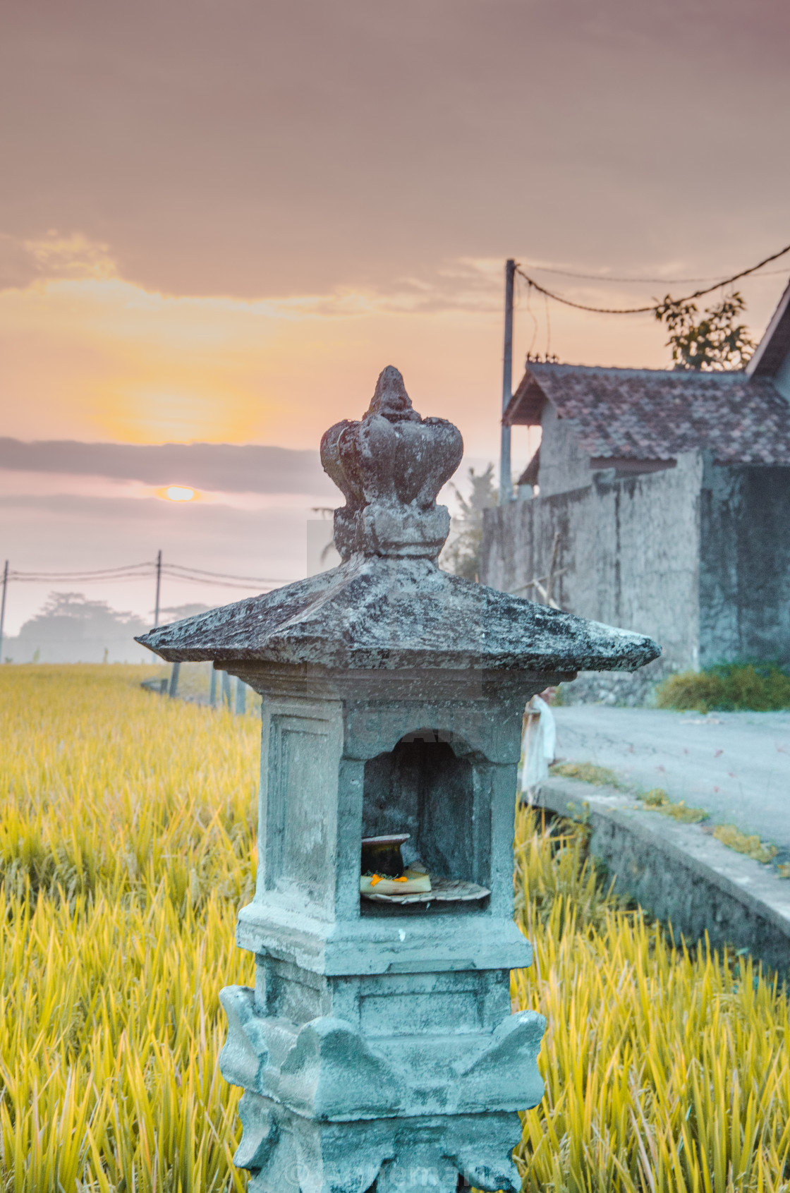 """Balinese Rice Fields at Sunset"" stock image"