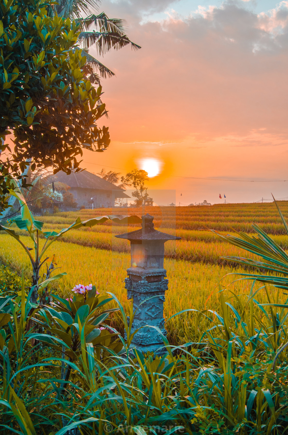 """Balinese Rice Fields at Sunset"" stock image"