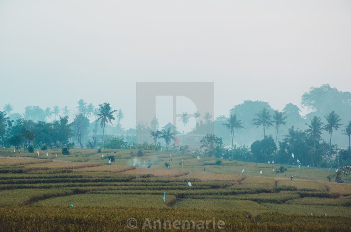 """""""Balinese Rice Fields at Dusk"""" stock image"""