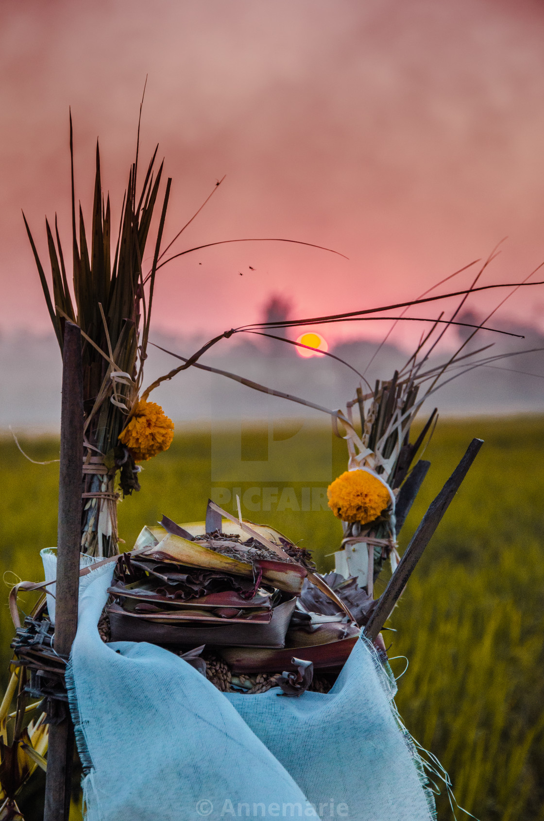 """Balinese Rice Fields and Offerings"" stock image"