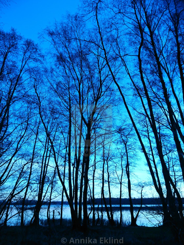 """Blue evening"" stock image"