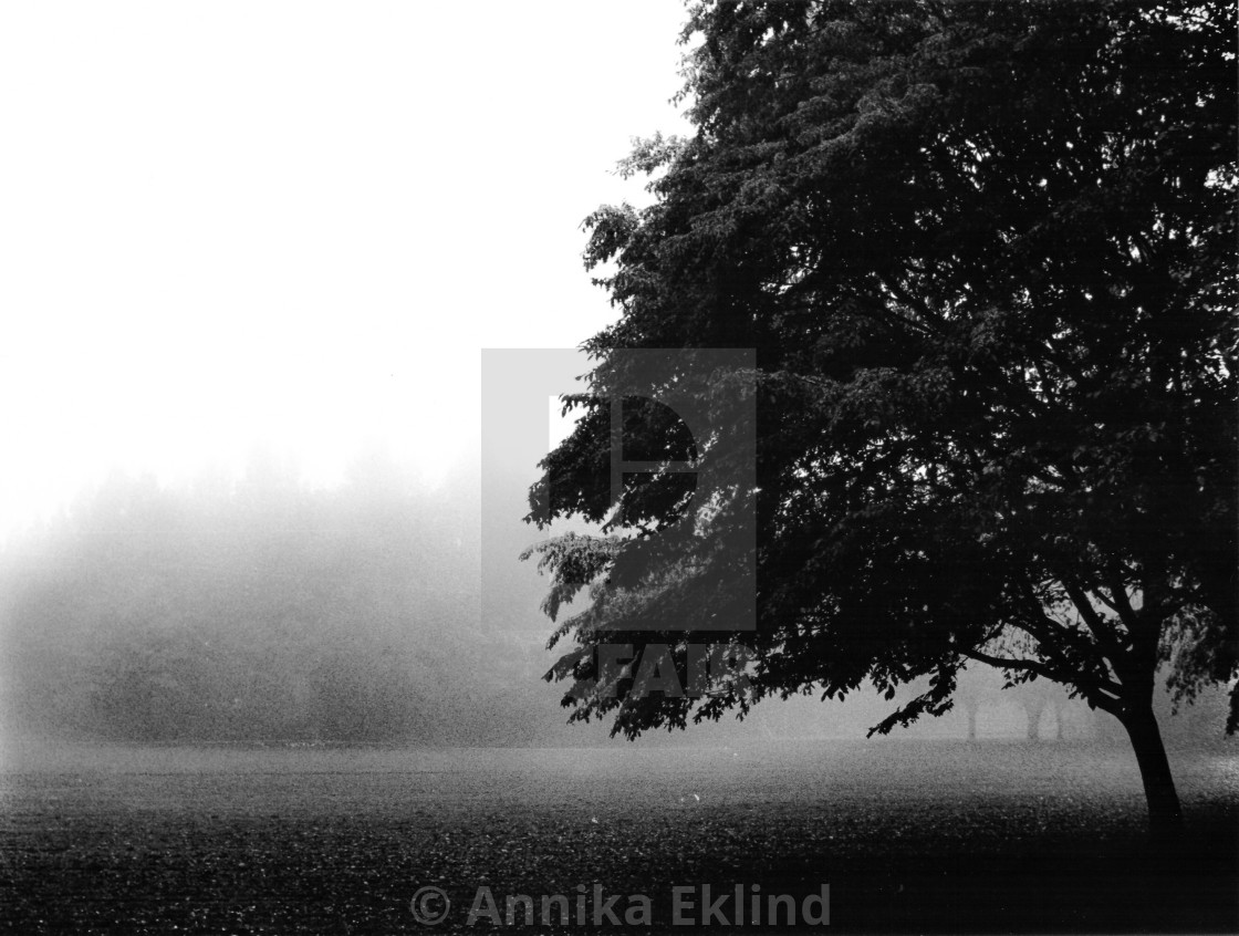 """Misty Morning in the Park"" stock image"