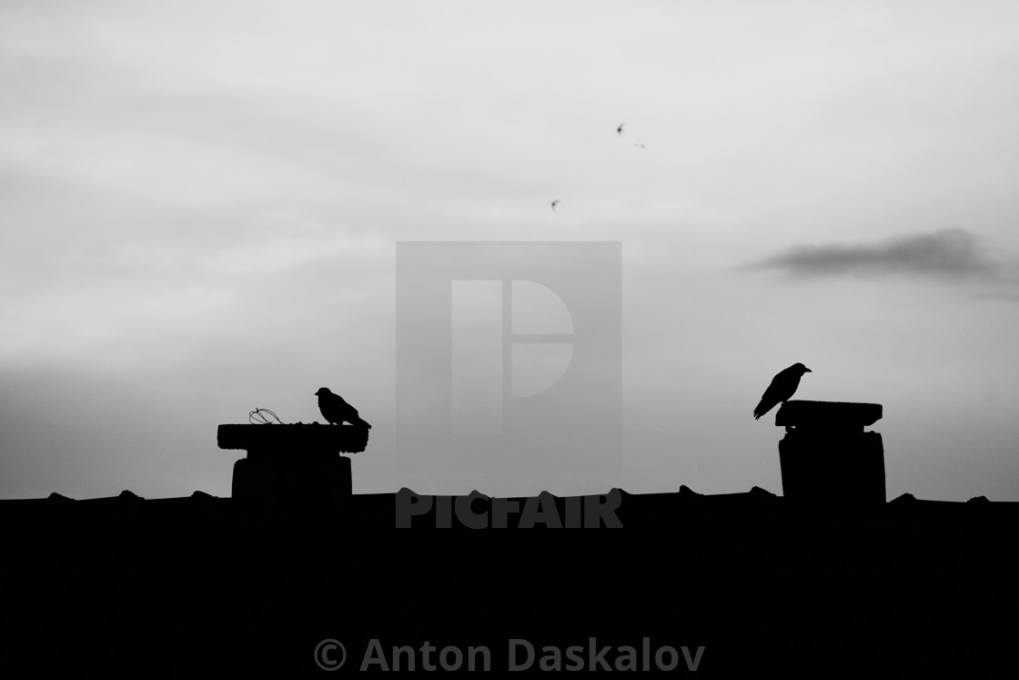 """""""silhouettes of ravens perched on two adjacent chimneys"""" stock image"""