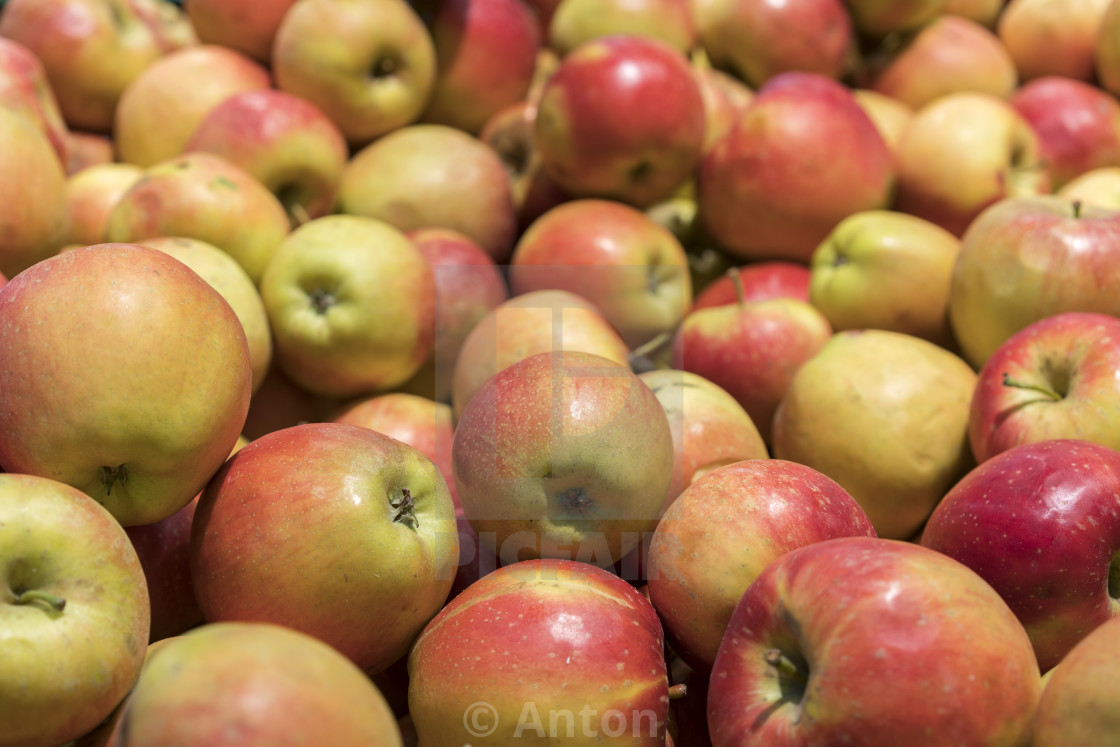 """""""Many red apples in mall on sale closeup shot natural color image. Healthy and..."""" stock image"""