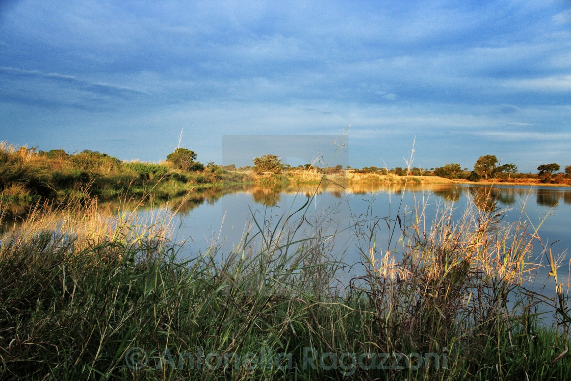 """late afternoon at Kruger"" stock image"