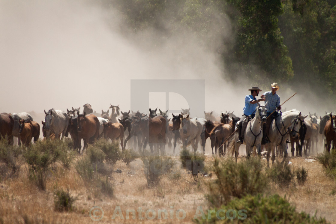 """Wild Horses and Ranchers."" stock image"