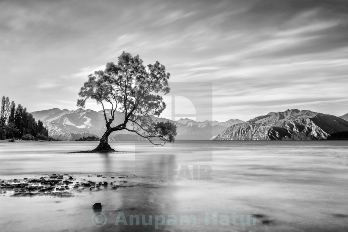 """""""The Lonely tree stands still ...."""" stock image"""