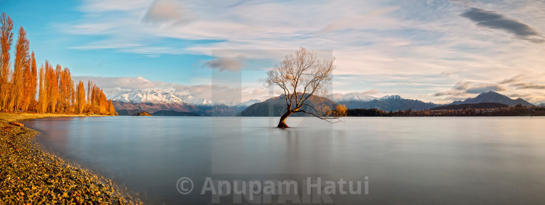 """The Tree of Lake Wanaka, South Island, New Zealand"" stock image"