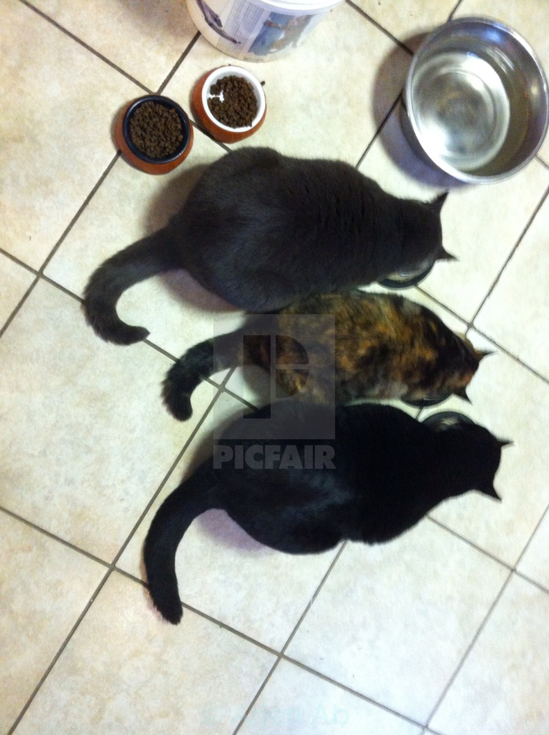 """Three cats eating"" stock image"
