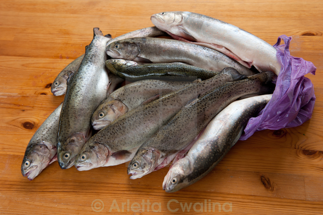 """""""Caught fresh trouts fish carcass"""" stock image"""