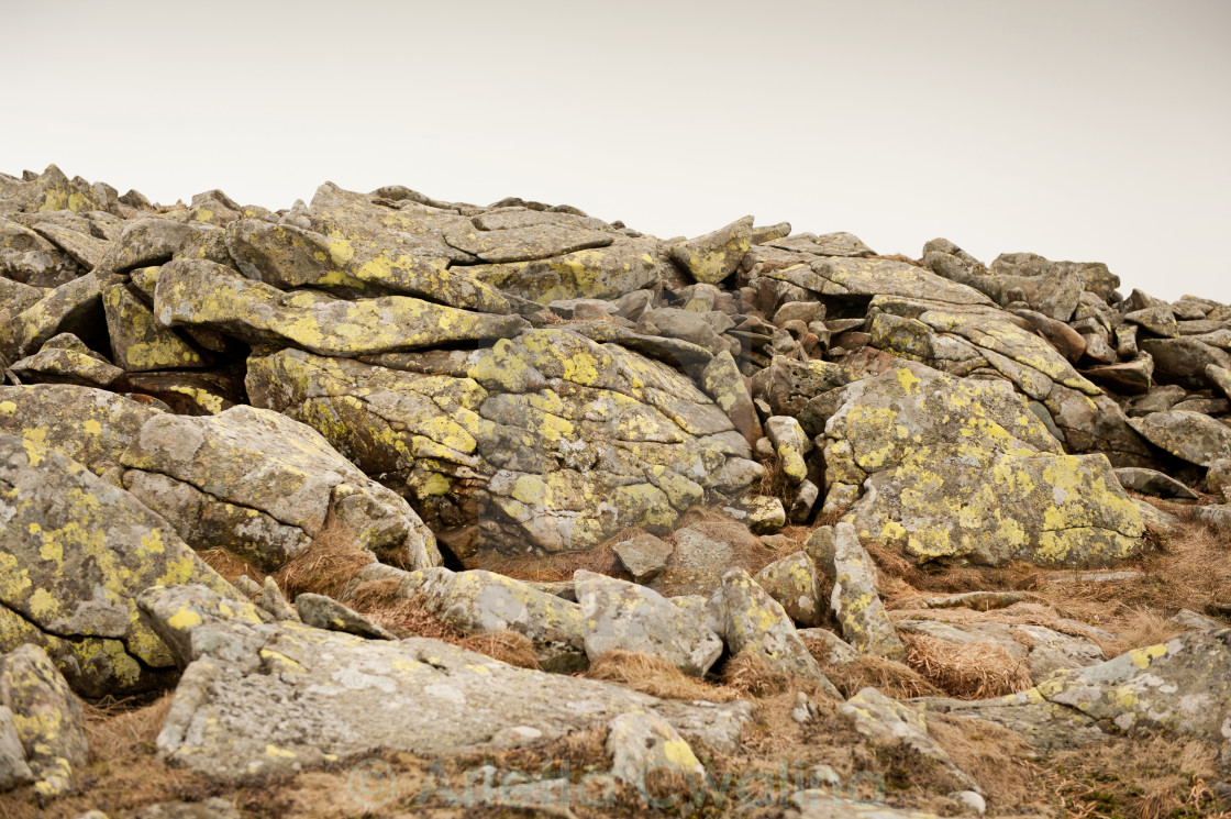 """Lichen on stones slabs"" stock image"