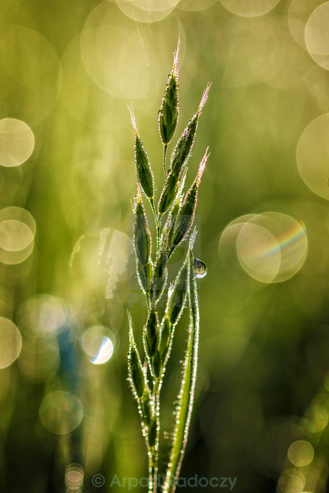 """Green grass at the morning"" stock image"