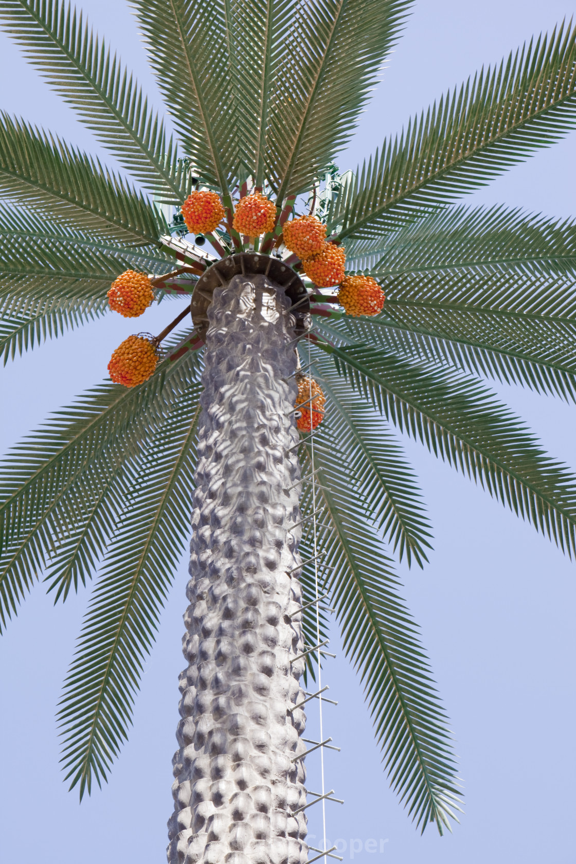 """A mobile phone mast made to look like a palm tree in Dubai"" stock image"