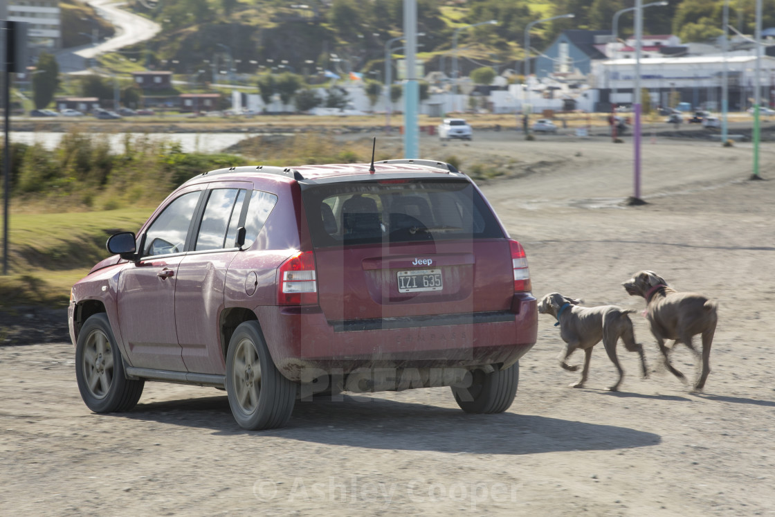 A lazy person walking their dogs from the car in the town of