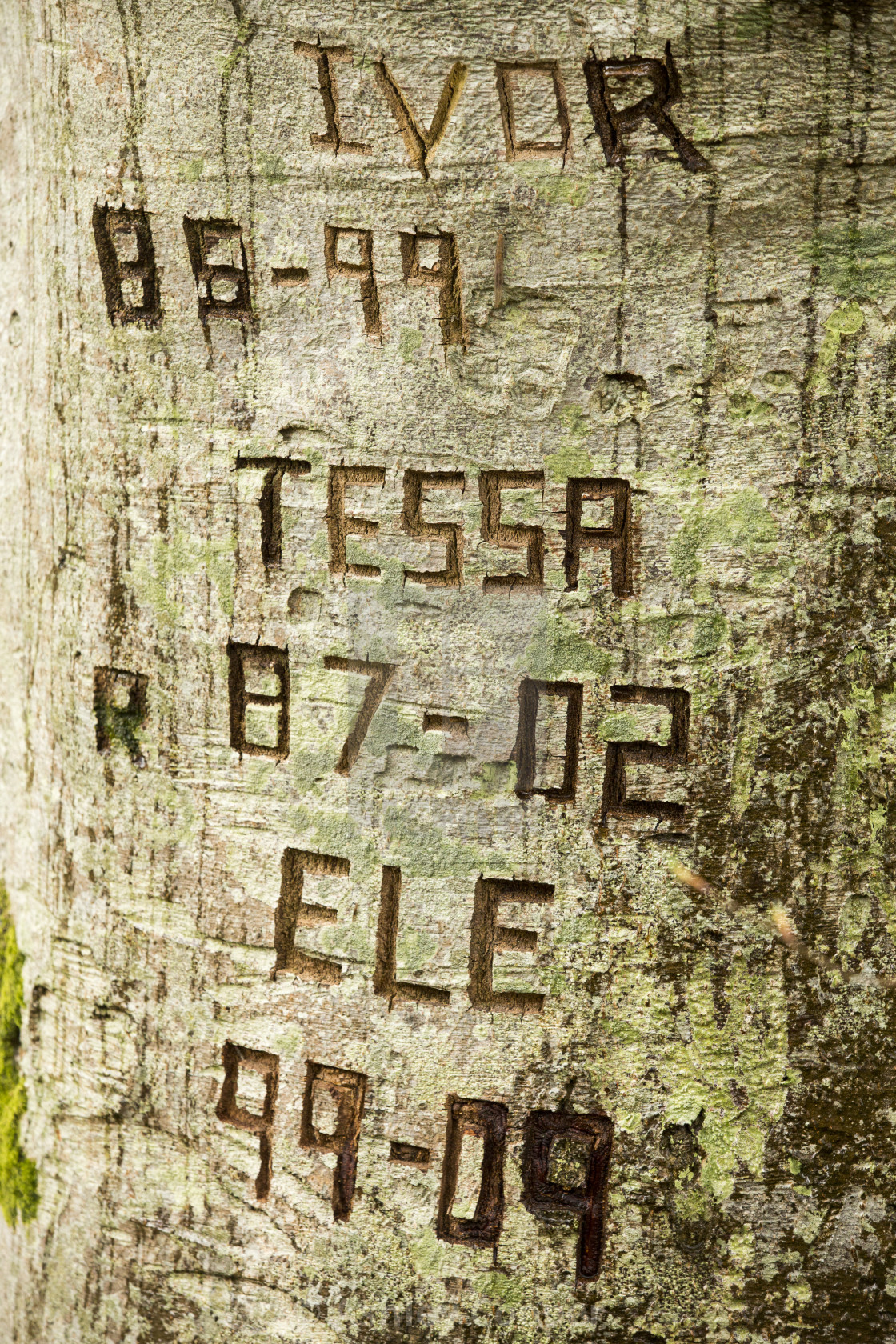 Names Carved Into A Tree Trunk By The Falls Of Acharn Near Loch Tay