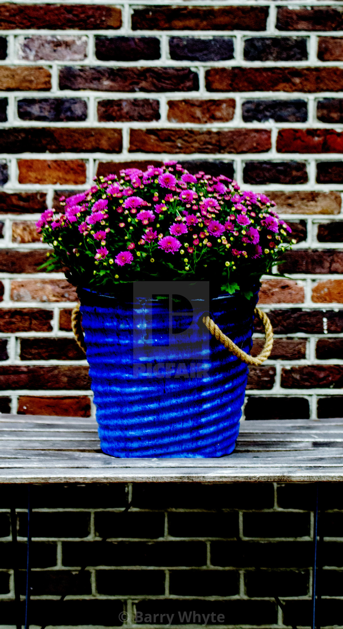 """Flower Bucket"" stock image"