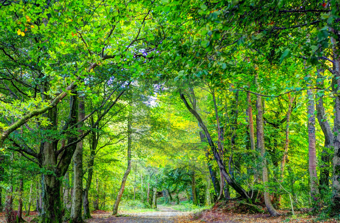 """Woodland Walks"" stock image"