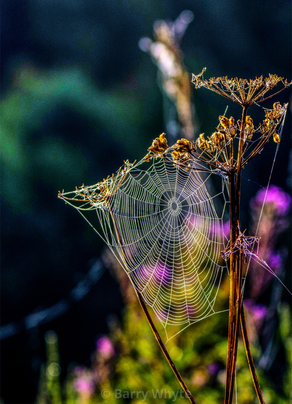 """Spider's Web"" stock image"
