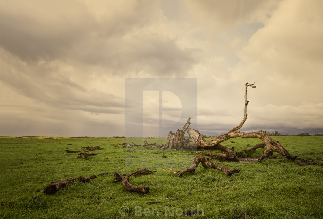 """Storm Passing Over a Dead Tree in a FIeld"" stock image"