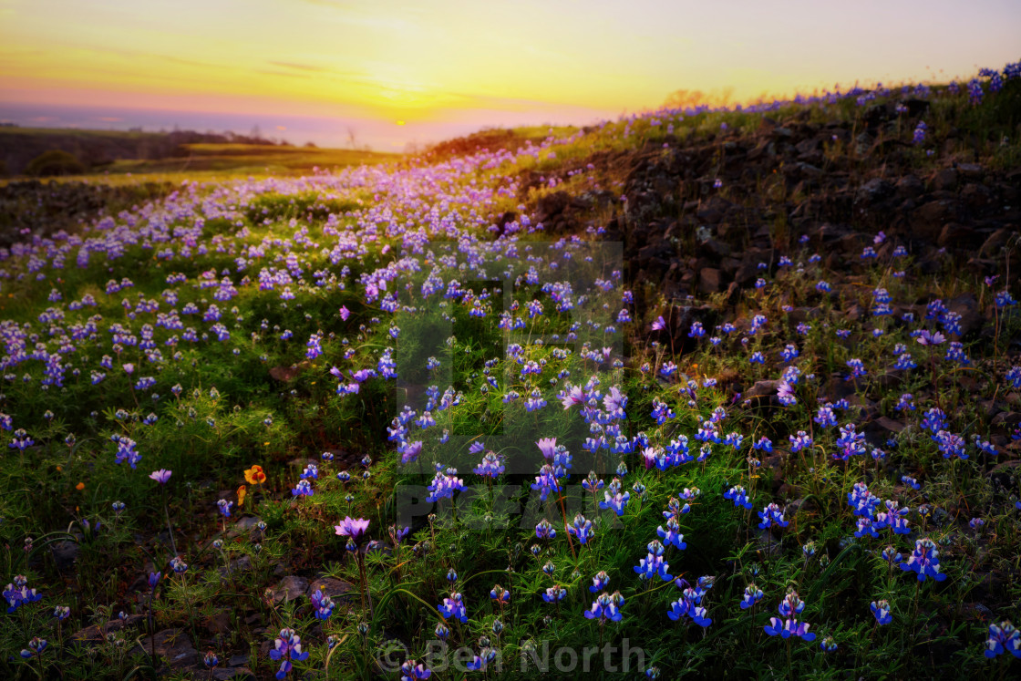 """Sunset Over A Field Of Wildflowers"" stock image"