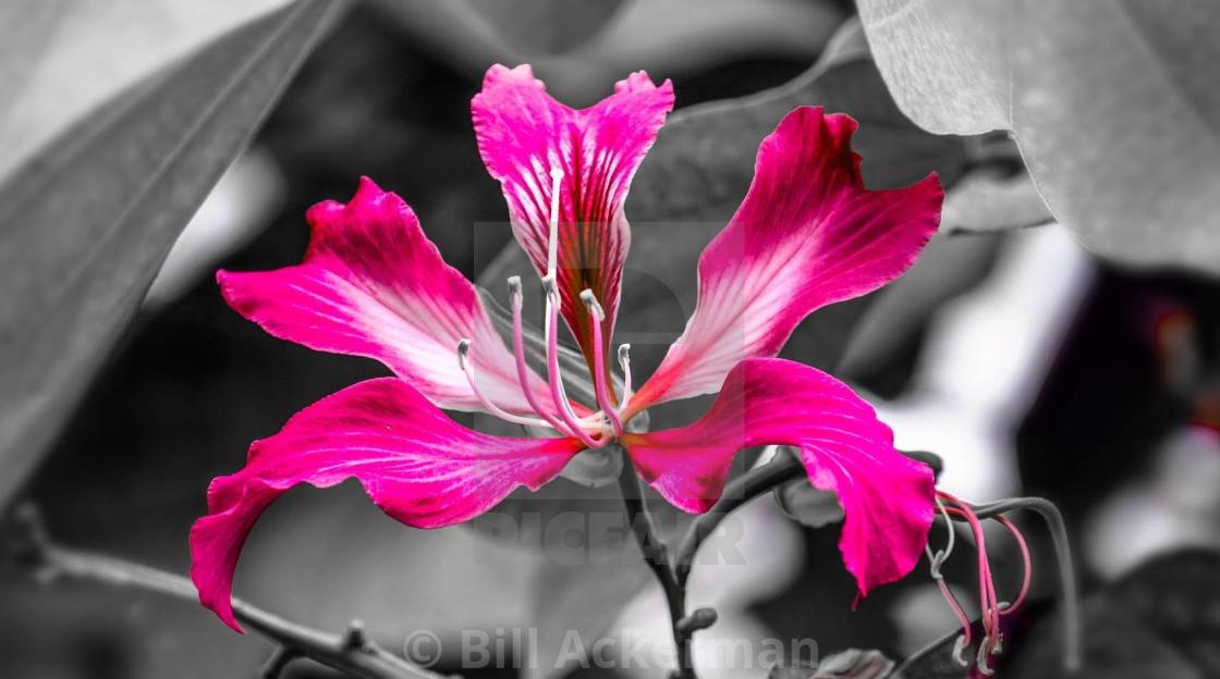 """Floral Fantasy"" stock image"