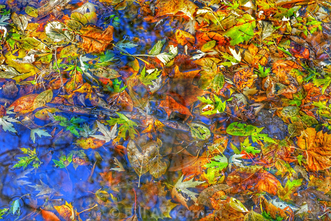 """Autumn Leaves on Water"" stock image"