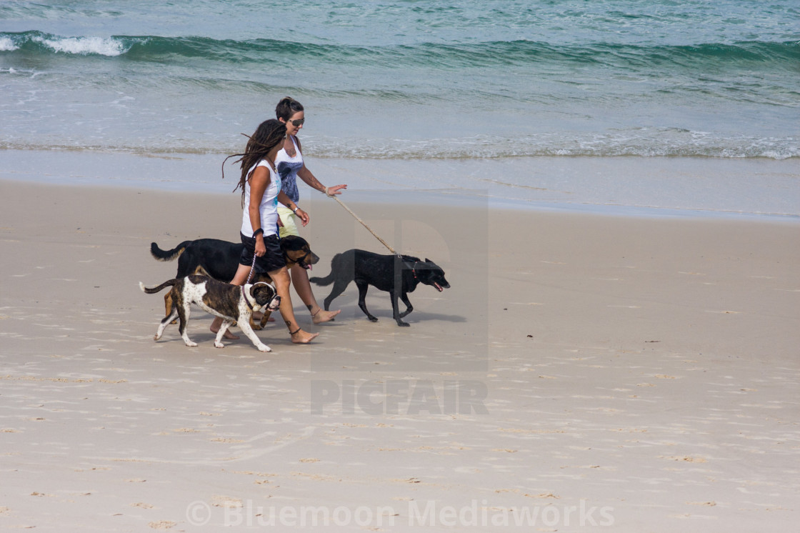 """Walking the humans"" stock image"