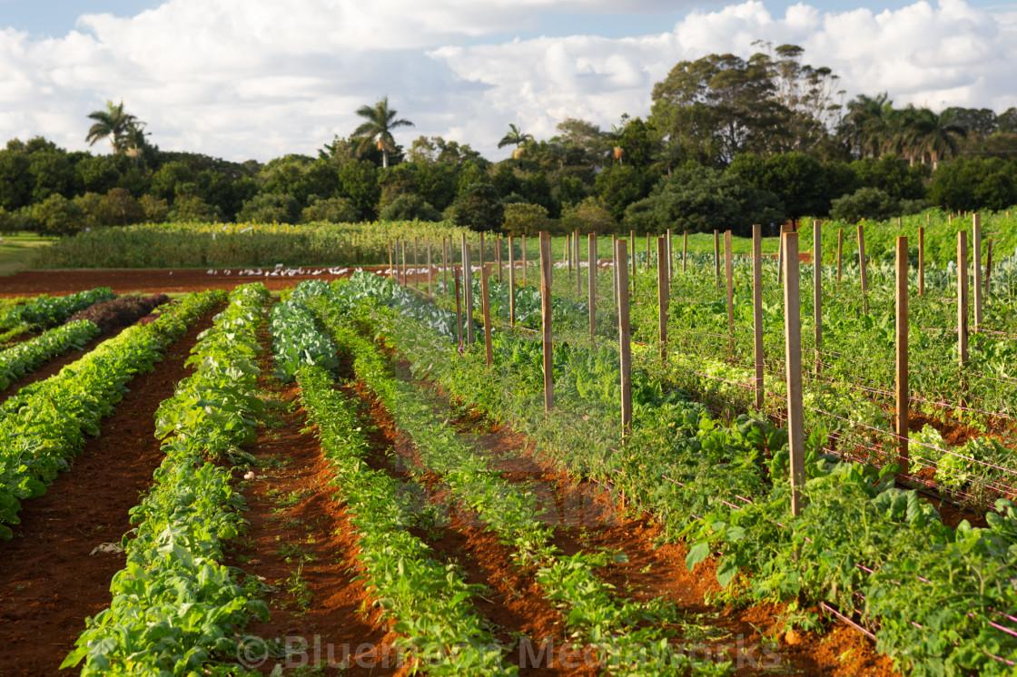 """""""Fertile soil"""" stock image"""