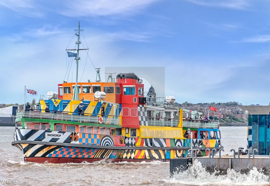 """Mersey Ferry Snowdrop"" stock image"