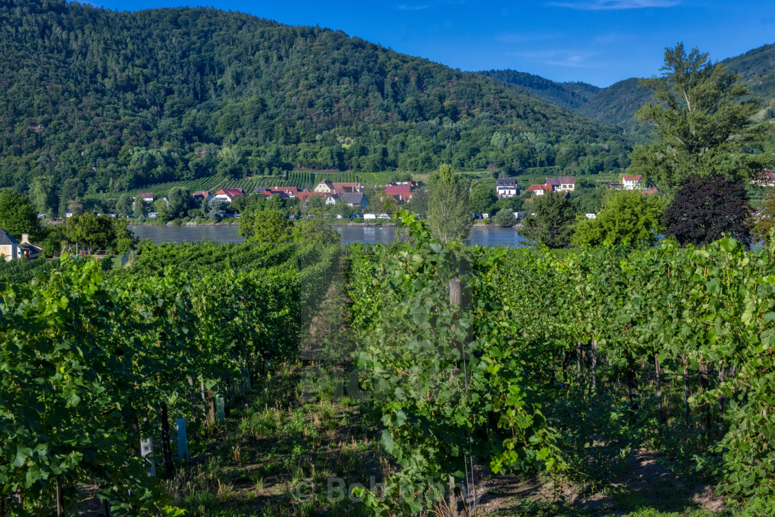"""Durnstein Vineyards"" stock image"