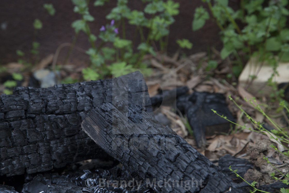 """Burnt Firewood"" stock image"